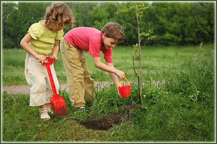 дети сажают деревья картинки